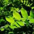 【オーラ診断・鑑定】黄緑色のオーラを持つ人の特徴と見分け方