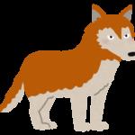 【動物占い】クリエイティブなオオカミ(オレンジ)の性格や相性について