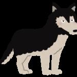【動物占い】好感の持たれる狼(ブラック)の性格や相性について