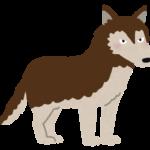 【動物占い】穏やかなオオカミ(ブラウン)の性格や相性について