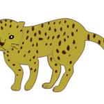 【動物占い】全力疾走するチーター(ゴールド)の性格や相性について
