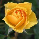 【オーラ診断・鑑定】黄色のオーラを持つ人の特徴と見分け方