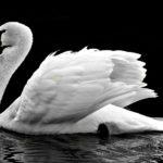 【オーラ診断・鑑定】白色のオーラを持つ人の特徴と見分け方