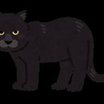 【動物占い】黒ヒョウタイプの特徴・性格・運勢・相性